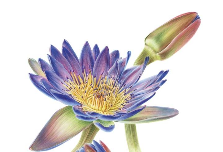 10 Facts about Botanical Illustration You Never Knew